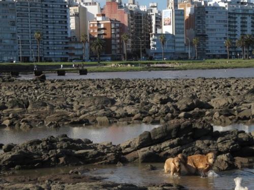 Cães aproveitam o verão em Montevidéu. Ao fundo, calçadão que passa por toda a orla da cidade.