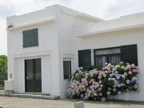 Arbustos de hortênsias na porta - um detalhe charmoso nas casas de La Pedrera.